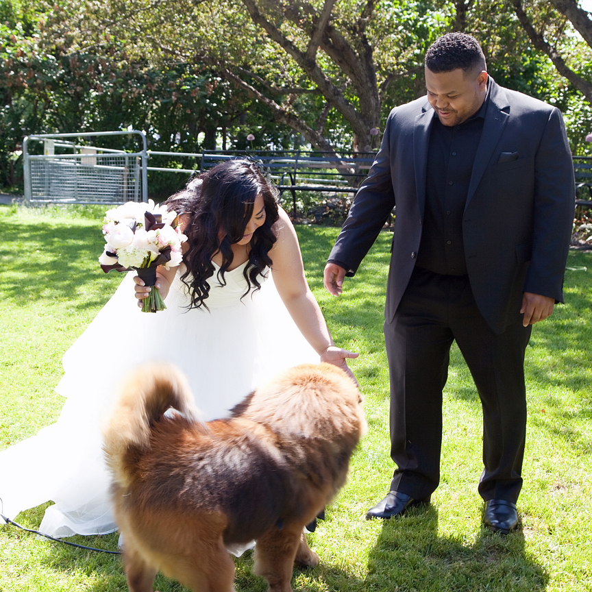 first look with dog wedding portrait at Toronto Music Gardens